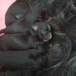 """""""von Basum Co"""" (Tibet Terrier) PLZ 67308"""